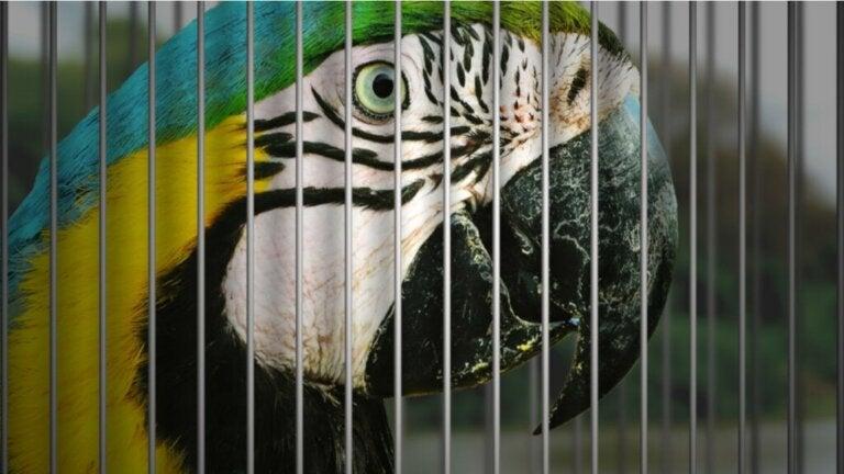 7 Husfugle i fare for udryddelse