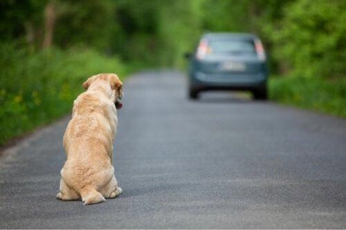 Hund på vej viser vigtigheden af at hjælpe en forladt hund