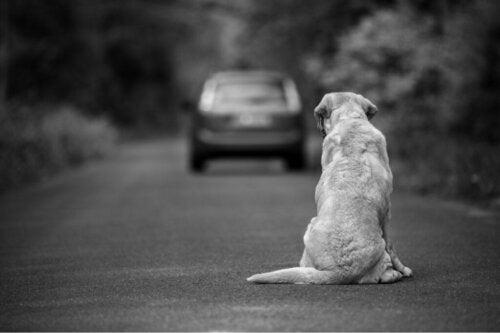 10 måder at hjælpe en forladt hund på