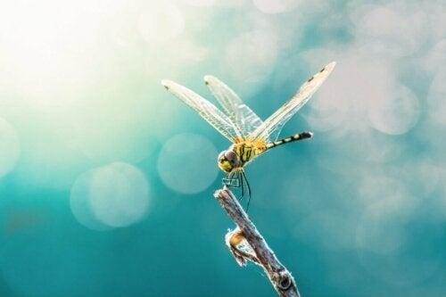 En guldsmed flyver