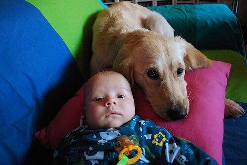 En hunhund ammer en forladt baby