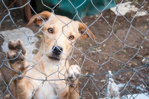 En hund bag tremmer er eksempel på forladte hunde