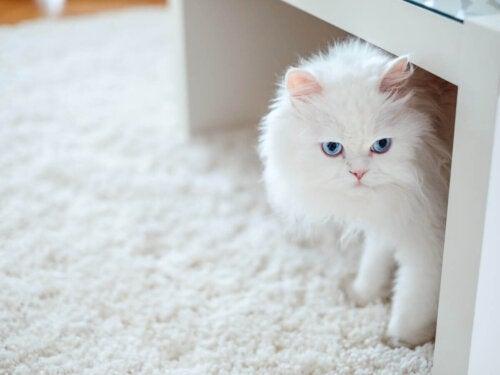 Hvid kat gemmer sig