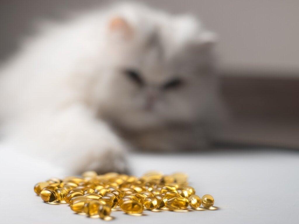 14 Fordele ved fiskeolie til katte