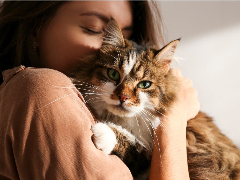 Er katte jaloux dyr?