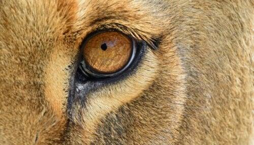 De 6 pattedyr med de mest udviklede sanser