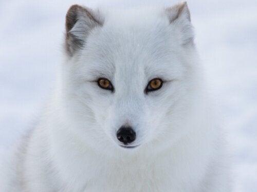 5 truede dyr på Nordpolen