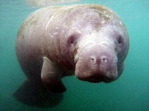 Søko er på listen over pattedyr med de mest udviklede sanser