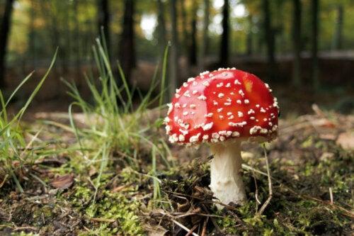 En svamp i skov