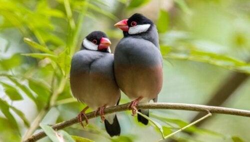 To fugle sidder sammen