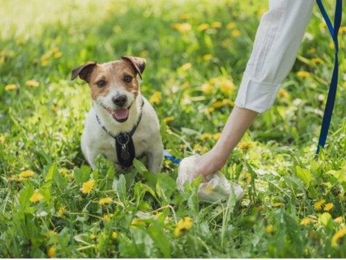 Typer af afføring hos hunde, og hvad de siger om deres helbred