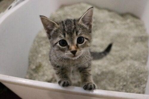 Hvor ofte skal gruset i kattebakken skiftes?