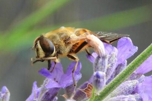 En bi på en blomst