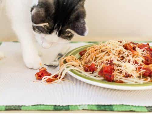 Ved du, om katte kan spise pasta?