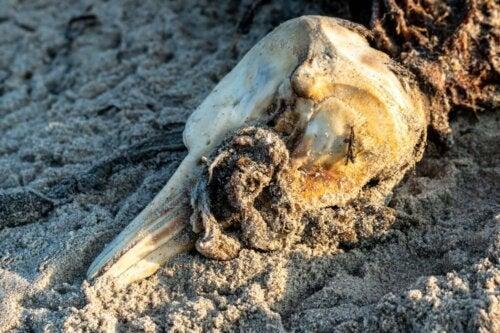 Skelettet fra en delfin har ført til en af de bedste dyredokumentarer