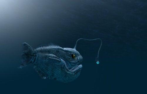 En dybhavsfisk