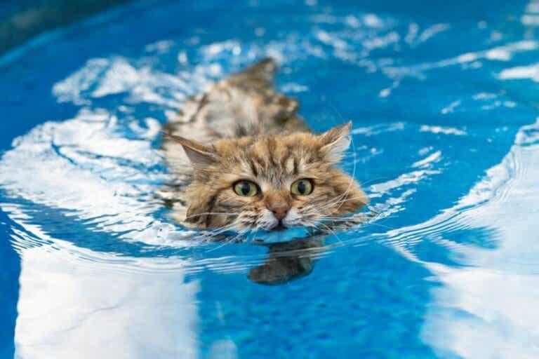 6 katteracer, der kan lide vand