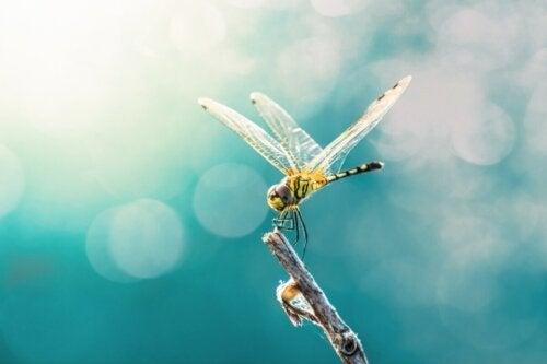 En guldsmed på gren