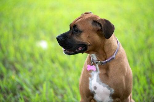 En hund på græs