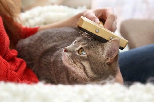 Kat børstes som en del af pleje af kattes hud