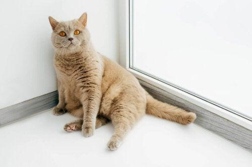 En kat hviler sig, men inaktivitet kan være tegn på smerter hos katte