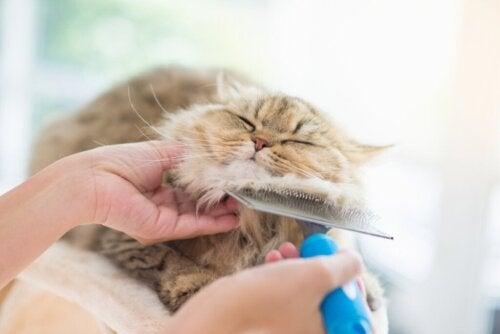 4 tips til pleje af kattes hud