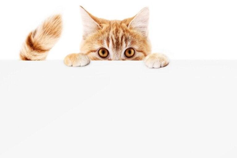 Ved du, hvorfor katte jagter deres haler?