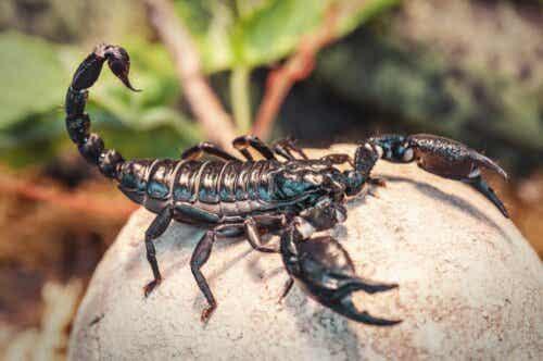Hvad spiser skorpioner?
