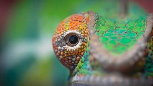 Læs om disse 5 dyr med store øjne