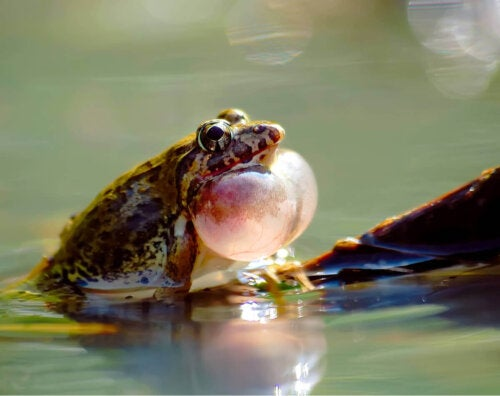 En padde i vand