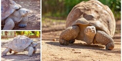 Tre billeder af skildpadder