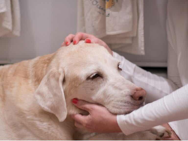 12 tegn på, at din hund kan have kræft