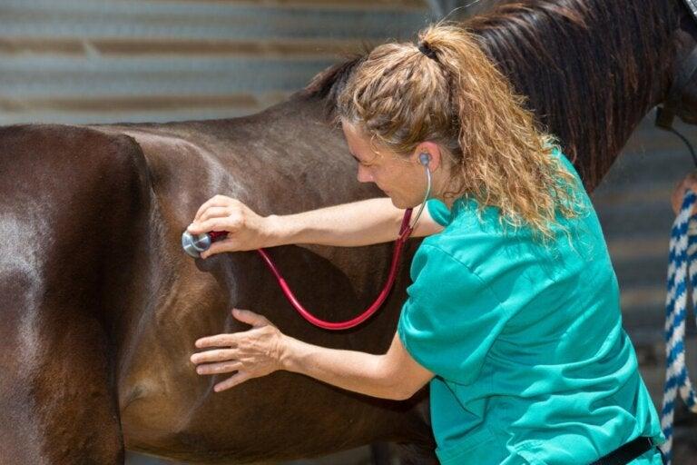Hvad er adenitis hos heste?