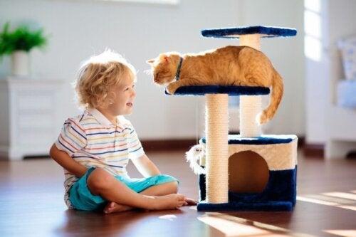 Dreng leger med kat og nyder fordele ved at bo sammen med katte