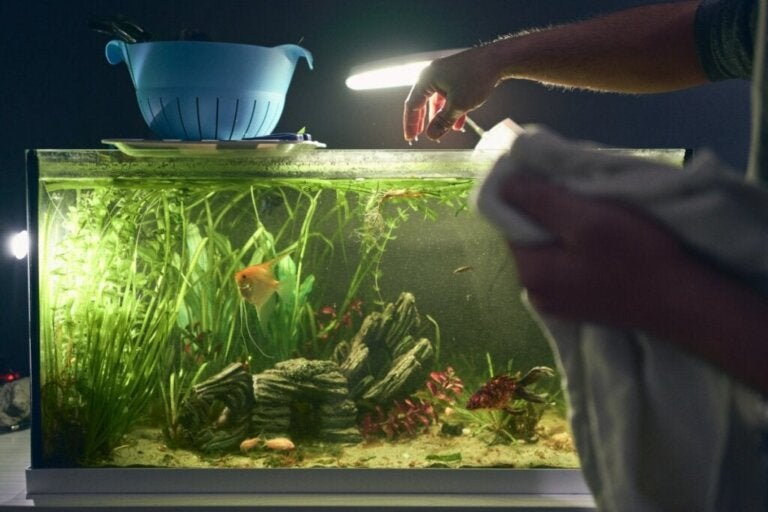 Hvordan installerer man lys i et akvarium?