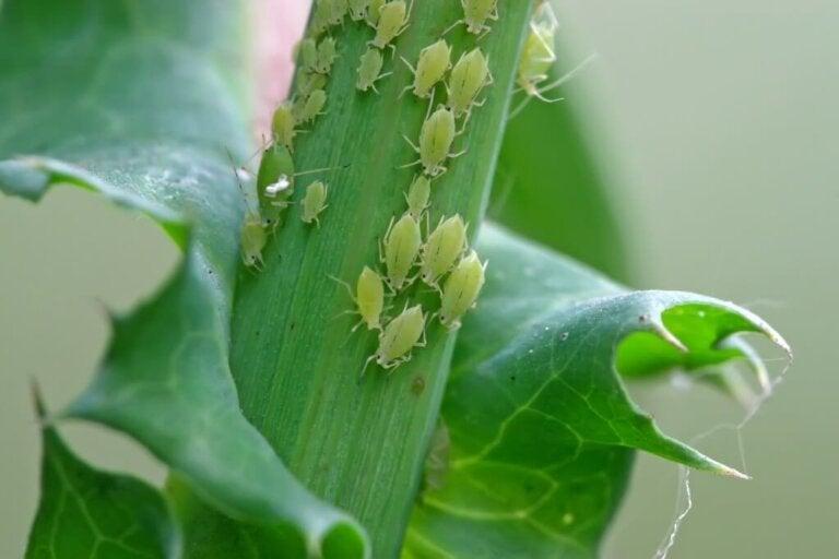 Sådan slipper du af med bladlus på planter
