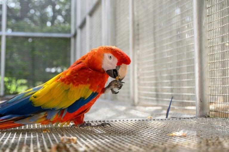 Kan papegøjer spise kogt æg?