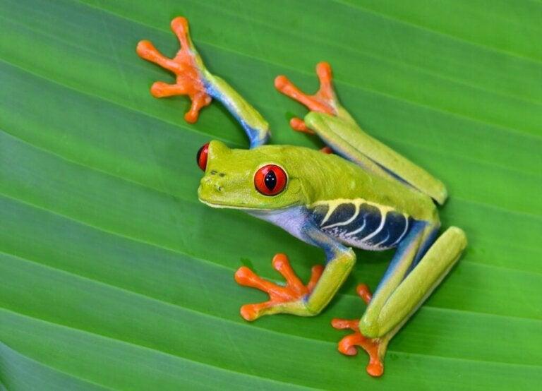 De 12 smukkeste dyr i Costa Rica