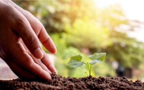 Hånd ved siden af spirende plante