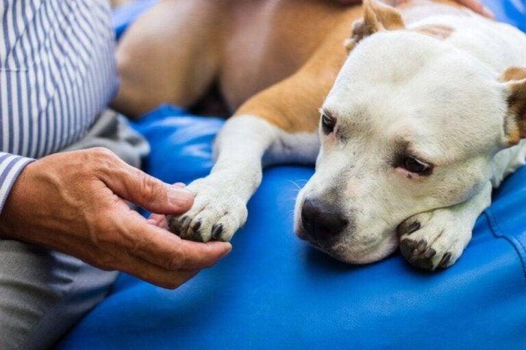 Forskelle mellem gigt og slidgigt hos hunde