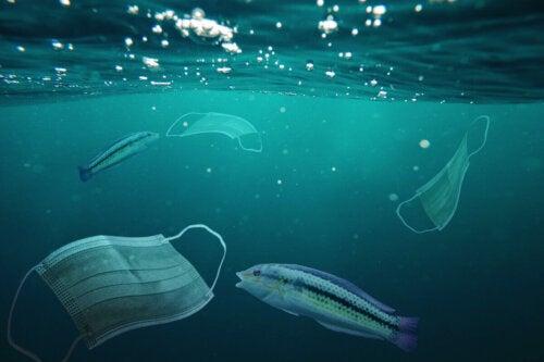Fisk svømmer rundt om mundbind