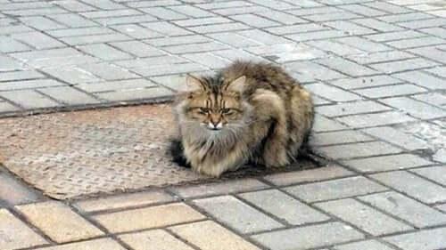 Hylätty kissa odotti perhettään vuoden ajan