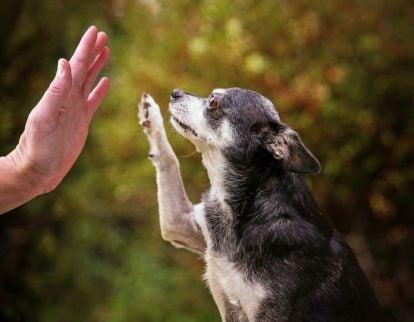 Näin kasvatat rauhallisen koiran