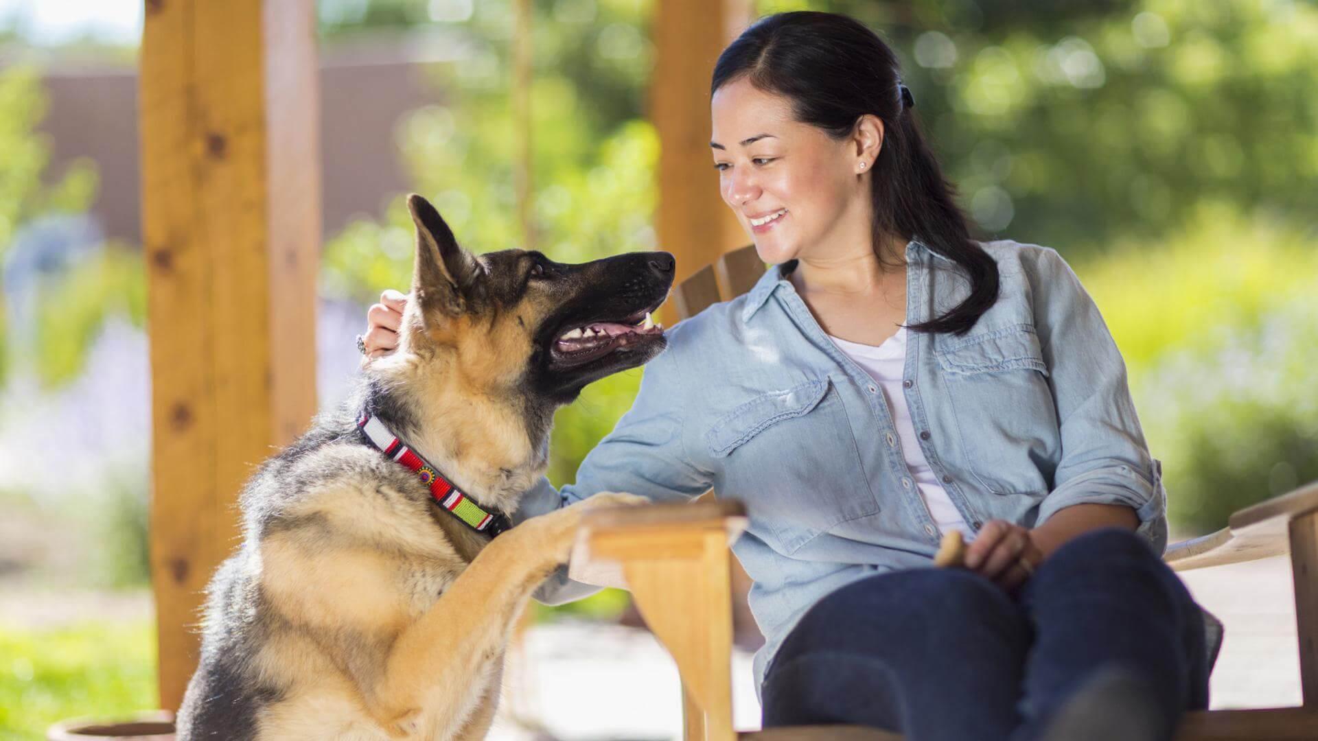 Koira ei luota ihmisiin, jotka eivät pidä sen omistajasta