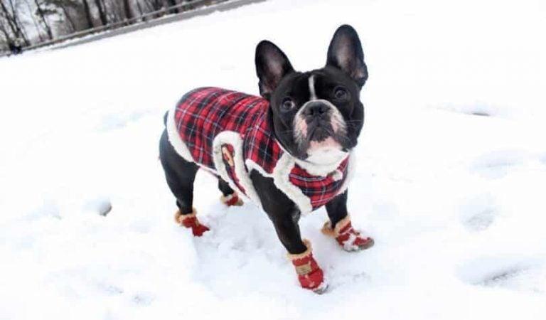 5 vinkkiä, kuinka pitää koira lämpimänä talvella