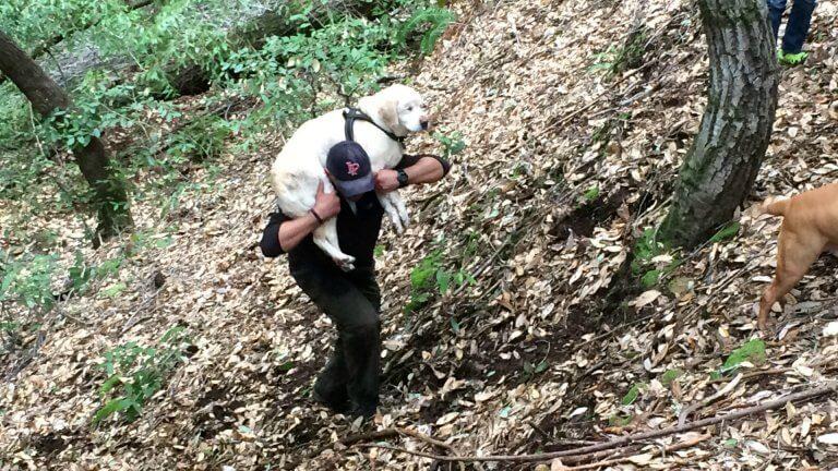 Sokea labradorinnoutaja selviytyi viikon yksin metsässä