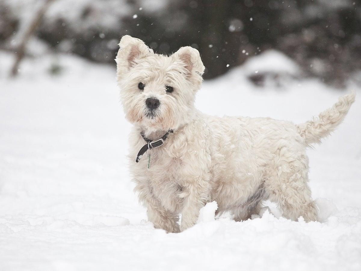 Kuinka pitää koira lämpimänä talvella?