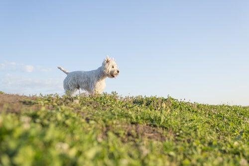 Tykkääkö koira ottaa aurinkoa?
