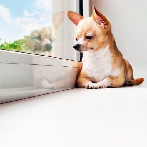 Vinkkejä omistajalle, jonka koira on paljon yksin kotona