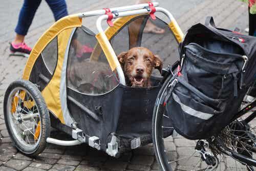 Koira matkasi Perun halki pyörän kyydissä